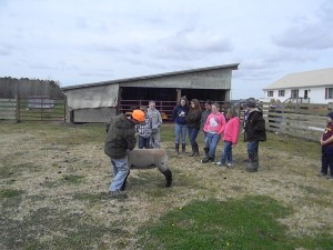 Cover photo for 4-H'ers Having Fun at the Livestock Workshop!