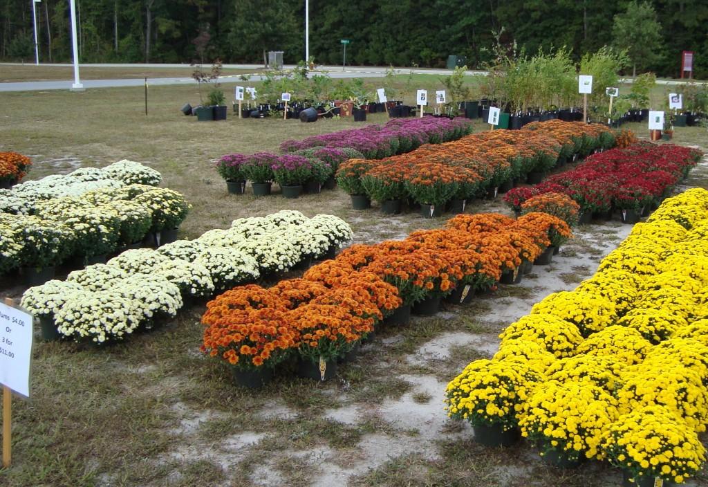 Fall Plant Sale North Carolina Cooperative Extension