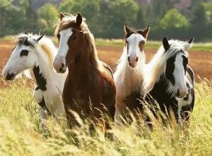 horses-uhc
