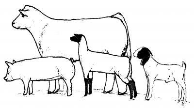 livestock drawings