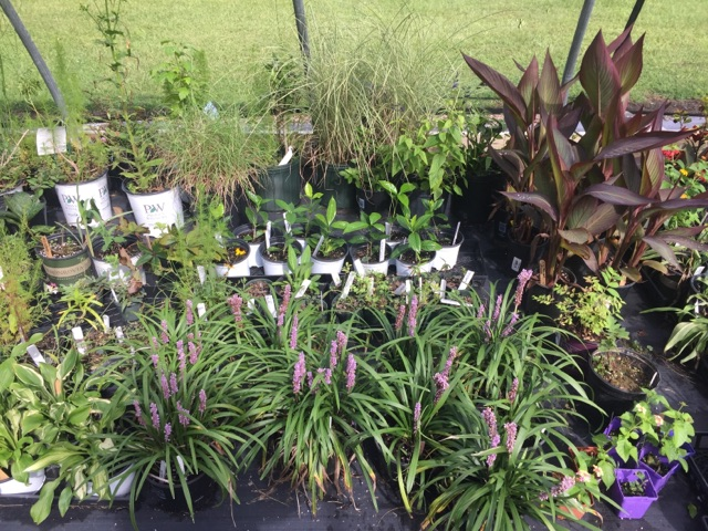 Currituck Master Gardener Fall Plant Sale To Join The Heritage Festival North Carolina