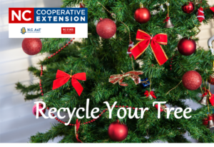 Cover photo for Recycle Your Christmas Tree