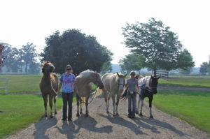 Horse and riders at camp