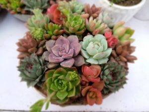 Cover photo for Exploring Succulents