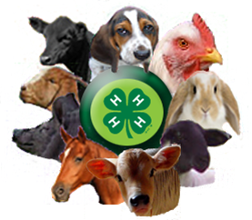 4-H Clover Medallion surrounded by pictures of various animals available for 4-H projects