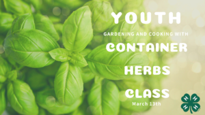 Container Herb Class