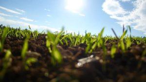 green plants in soil