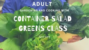 Cover photo for Gardening and Cooking: Adult Container Salad Greens (CANCELLED)