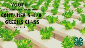 Cover photo for Gardening and Cooking: Youth Container Salad Greens (CANCELLED)