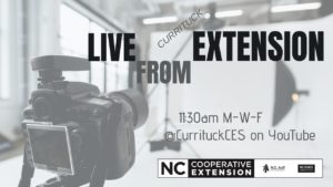 Ad for Live for Extension with image of camera and screen