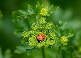 lady bug on plant
