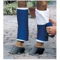 wrapping a horse leg