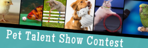 pets showing off their talent flyer for contest