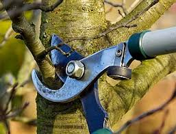 pruning shears on tree limb