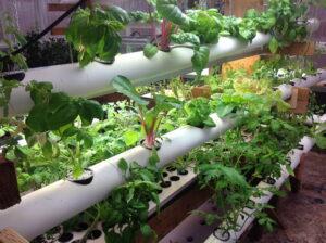 hydroponics rack