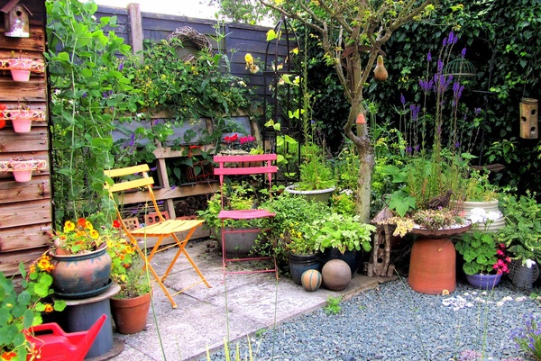 variety of plants and flowers on patio