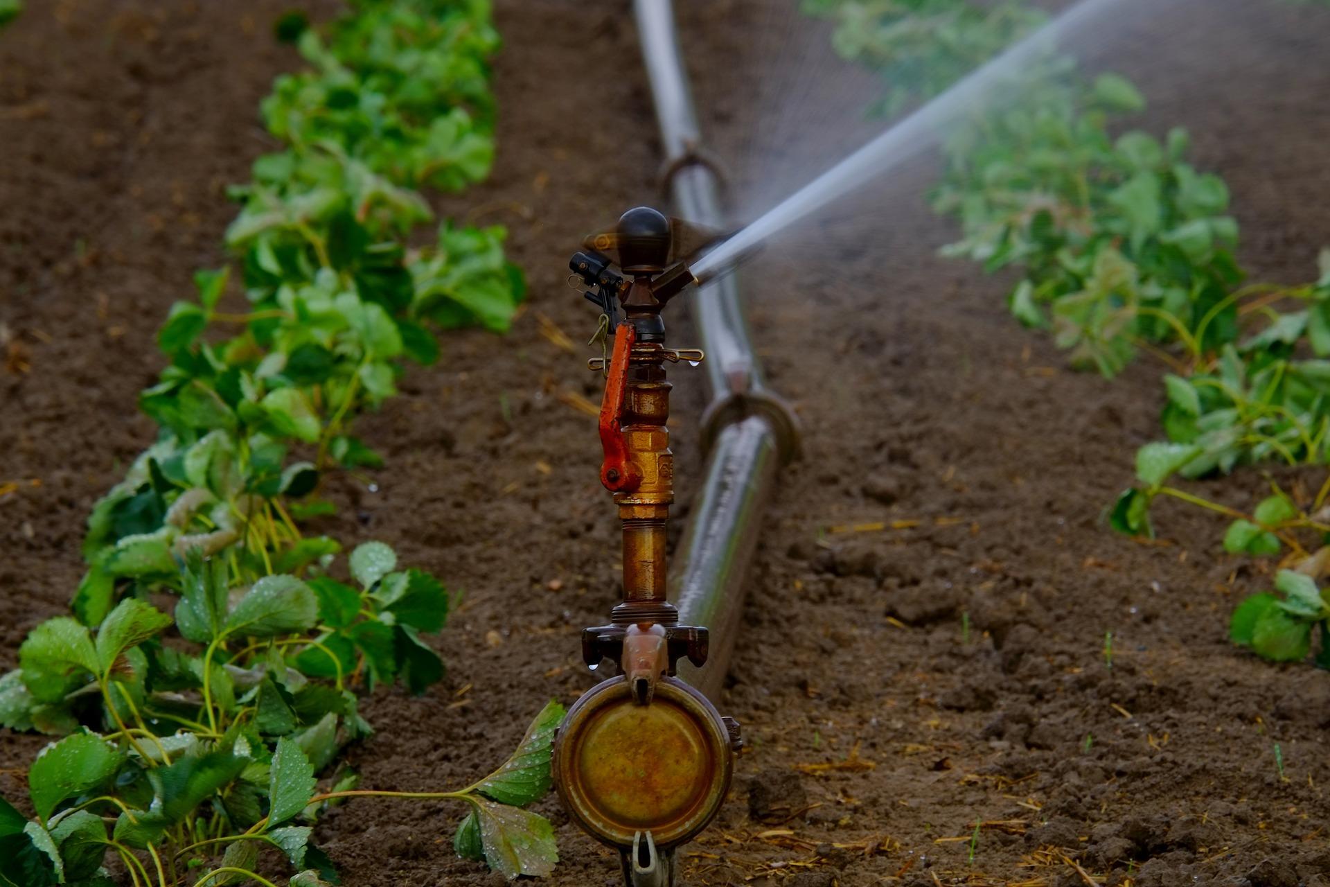 irrigation in garden