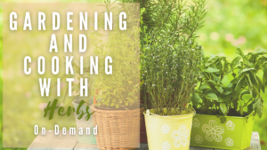 Cover photo for Gardening and Cooking with Herbs On-Demand