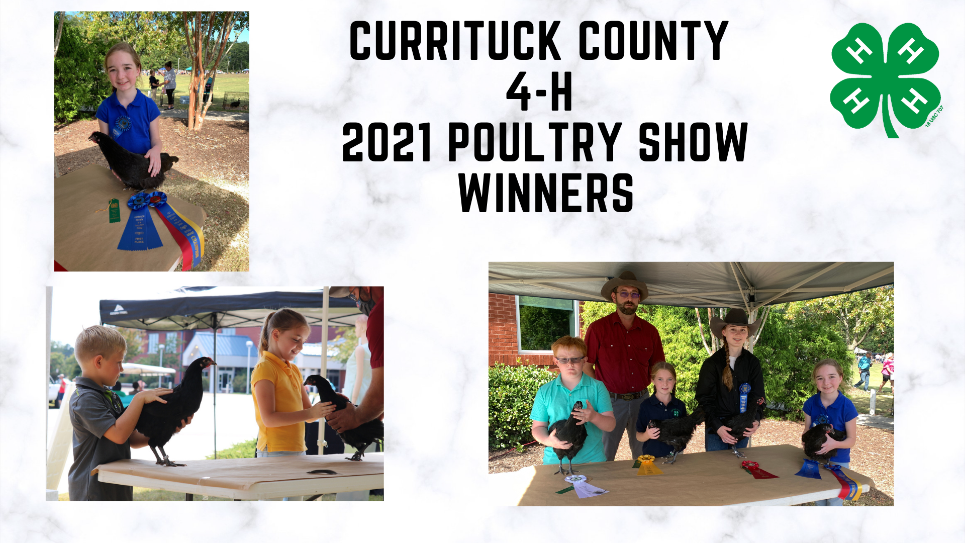 poultry show winners